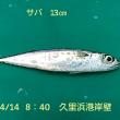 笑転爺の釣行記 4月14日☁ 久里浜港岸壁