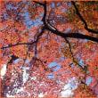 三郡山系 紅葉
