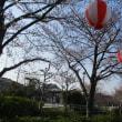 桜祭りも すでに終わり