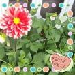 花が咲いたよ