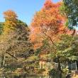 柿色の秋の朝に、