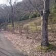 文殊の森で筋力アップ