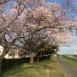 桜はまだまだ。着るものに困る。