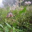 赤城自然園・渡り蝶のアサギマダラを・・・でも天候悪く~