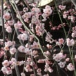 ツアー1カ所目は「湯島天神」で参拝と梅とお饅頭と甘酒~!