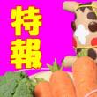 特報! LINEスタンプ第2弾は ぬいぐるみマジュウローくん近々発売 その前に獅子オヤジも買って!!