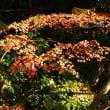 猿橋の紅葉~大月市①