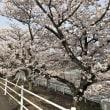 鈴鹿サーキットの桜