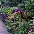 もう一つの Holy Garden 2018晩夏