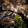 お犬様と夜桜見物