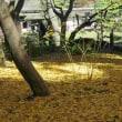 鎌倉、東京、横浜の旅