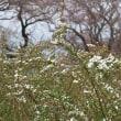 大野極楽寺公園に春が来た! 4