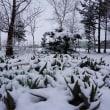雪です。海には「流氷」が!!!
