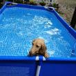 プールだ~~~!