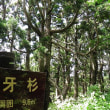 佐渡山野草探訪⑮ 象牙杉他 2018.06.30