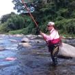 狩野川、和竿で鮎を釣る会