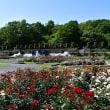 播磨中央公園 春のバラ '18