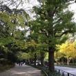 ★明治神宮北参道への道