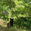 新緑の候、黒猫