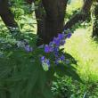 初夏から夏へ…花が開花中