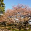 2018年 3月の風景(坂田城址梅林)