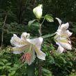 飯盛山の花