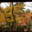 金沢城公園と兼六園の紅葉状況、椿の「加賀小絞り」など