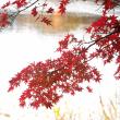 秋色ものがたり(Ⅸ)