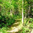 森の遊歩道(13)
