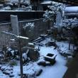 この冬初めての積雪。