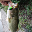 やっと野池で釣れた