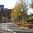 四季折々835  街路樹の秋