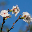 堤防の土手に、冬桜が咲いていました。(Photo No.14092)