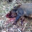 2月21日の狩猟