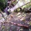 台風      Le Typhon