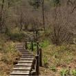 ツツジを観に、横根高原・井戸湿原へ
