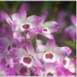 「ぐんまフラワーパーク」 温室エリア内の花々 (5の1)