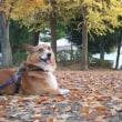 紅葉のきれいな公園で