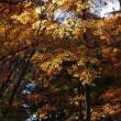 まだあった秋