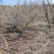 耕作放棄地に挑戦