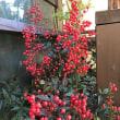 17冬花々