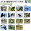 """""""ほとぎの里緑地""""の野鳥図鑑をつくってみました。"""