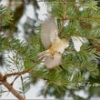 日本最小の小鳥