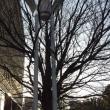 ラジオ体操的街路樹