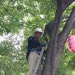平成29年東山町祭礼 電気設備工事