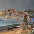 続 ・恐竜博物館