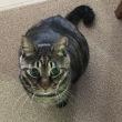 何度もくしゃみ!あれ~わが家の猫、風邪ひいた??