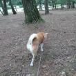 赤松林朝散歩