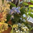 紫陽花の贈り物