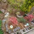 私の庭にも春がきました❤️